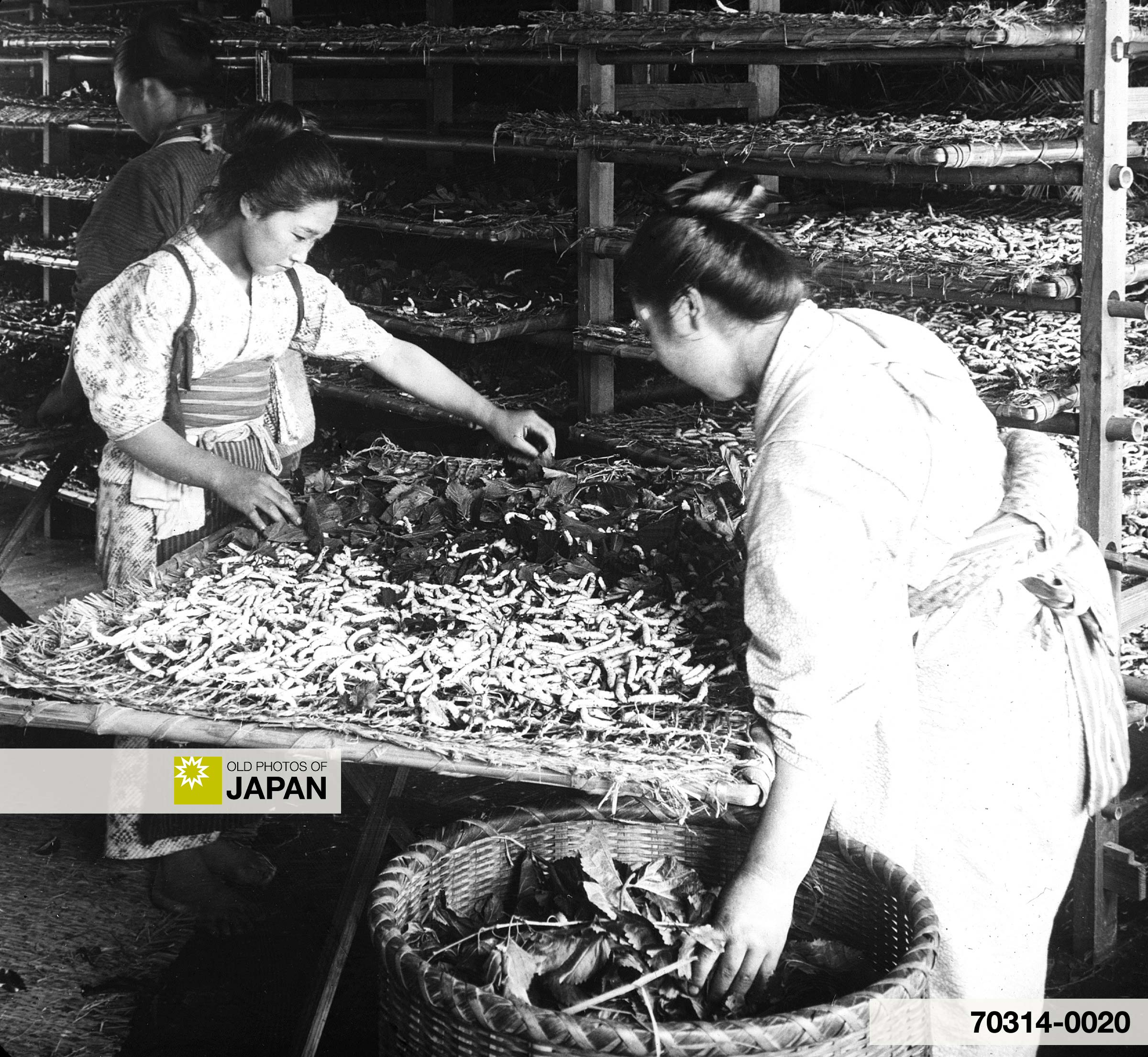 Two Japanese Women Feeding Silk Worms