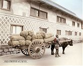 Bull Cart Load with Rice