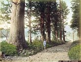 Cryptomeria Road, Hakone