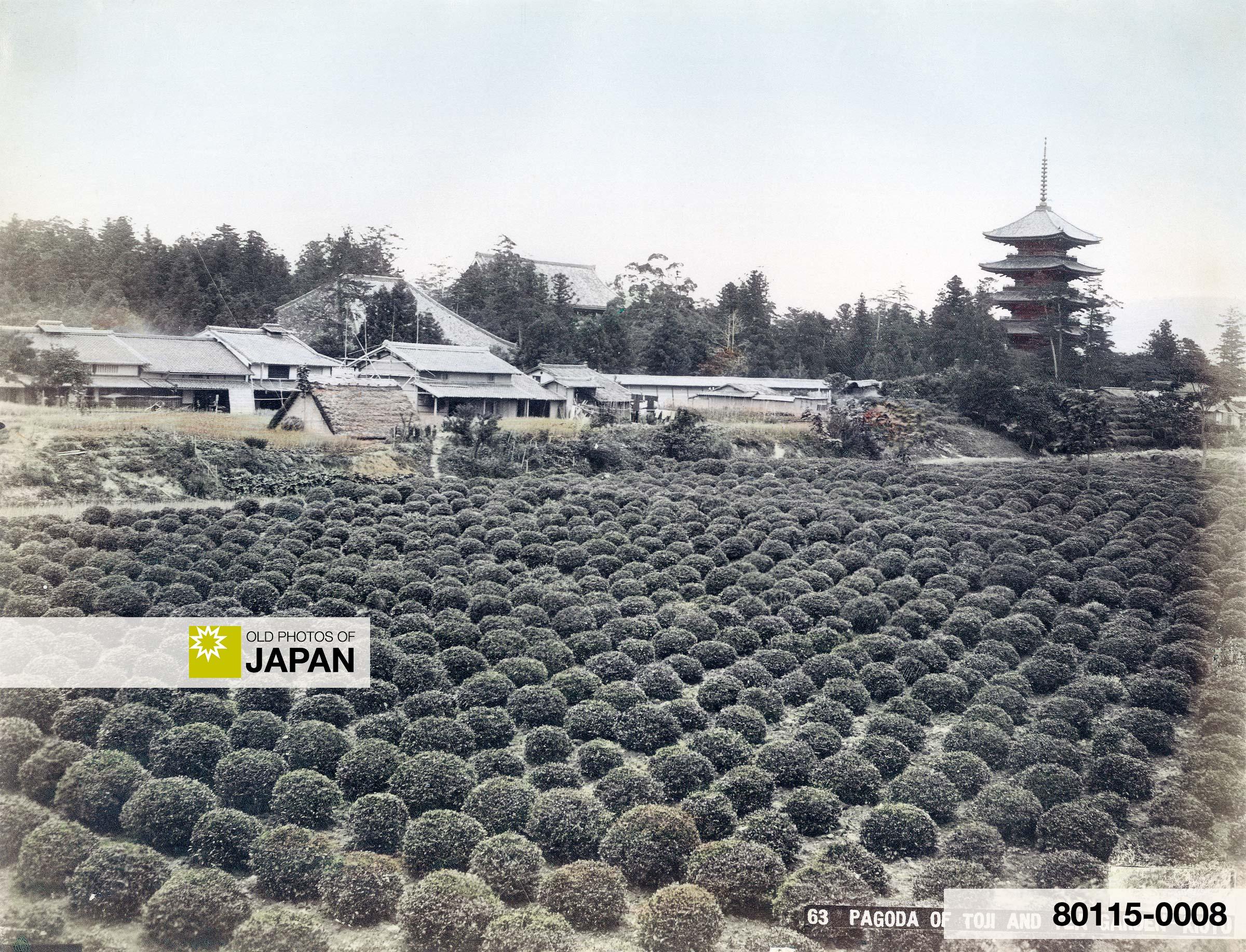 Tea Plantation and Toji Pagoda, Kyoto