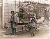 Japanese Flower Peddler