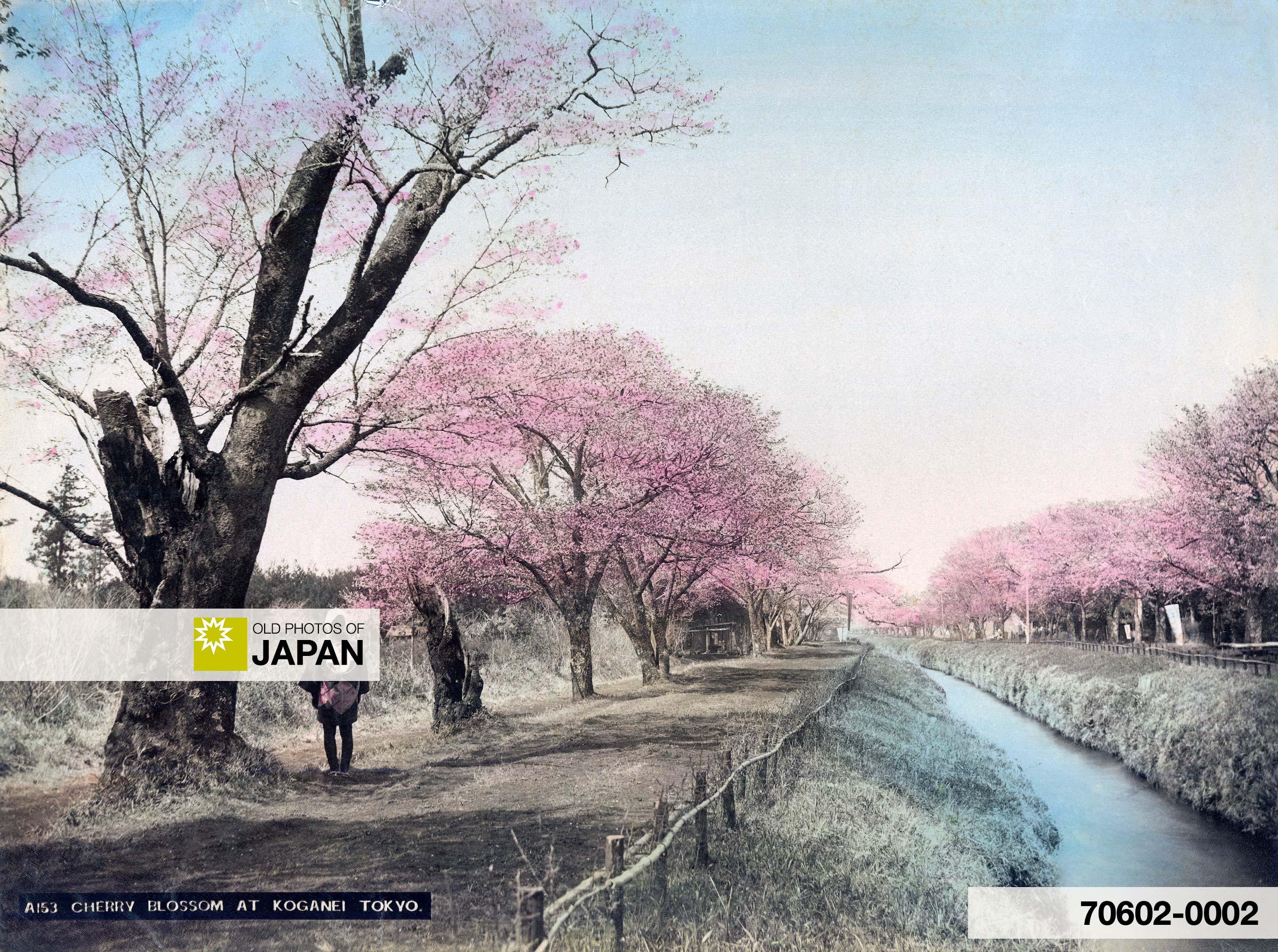 Tokyo 1890s • Koganei