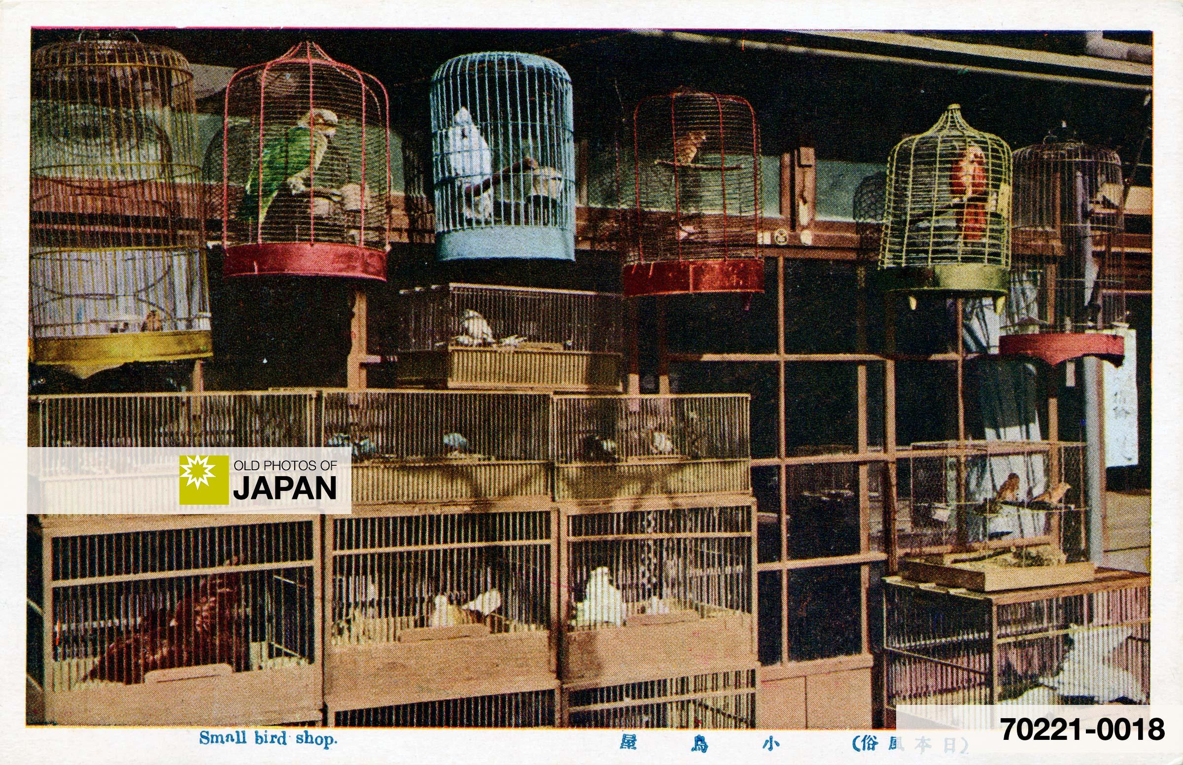 Japanese Shop Selling Pet Birds